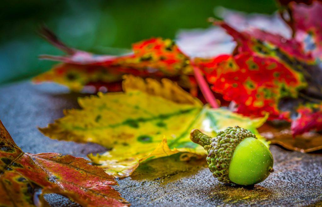 Préparer son jardin pour l'automne - Soleil et Jardin