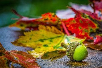 entretien jardin automne
