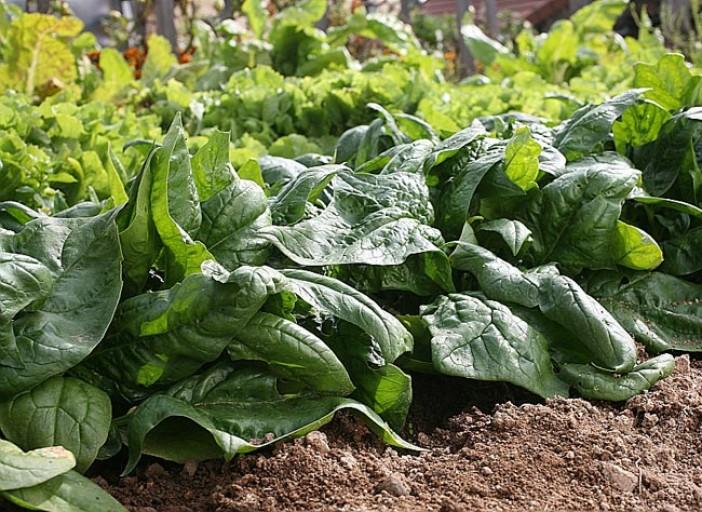 légumes à planter en automne