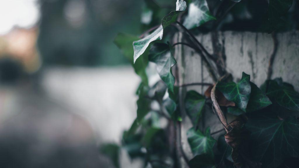 plante pour jardinière d'hiver
