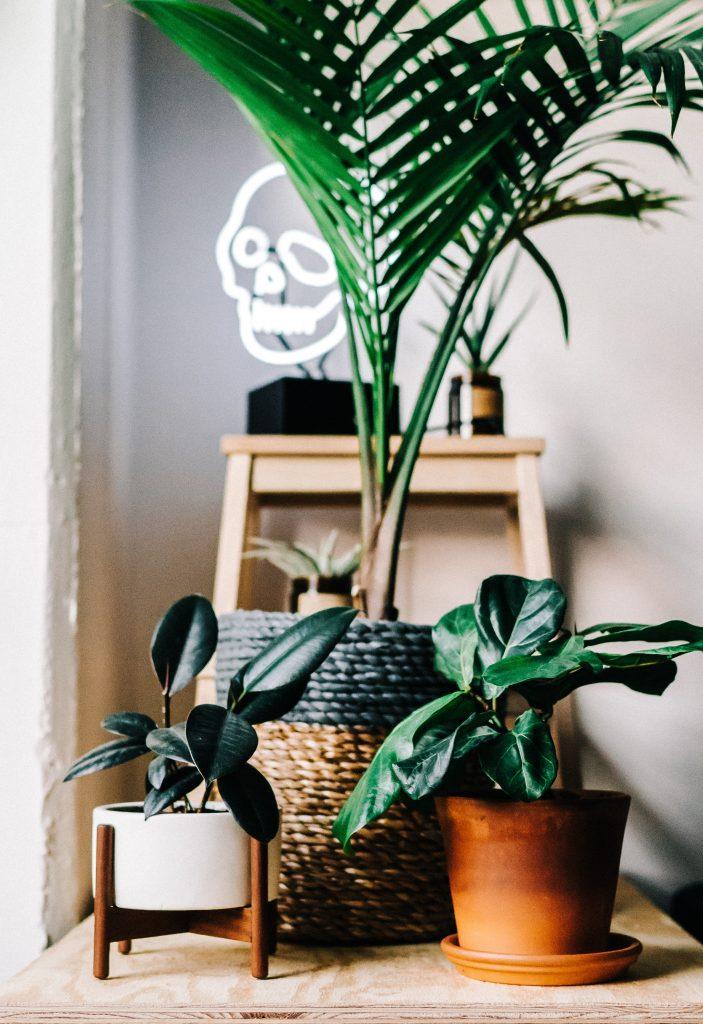 plantes à cultiver en pot