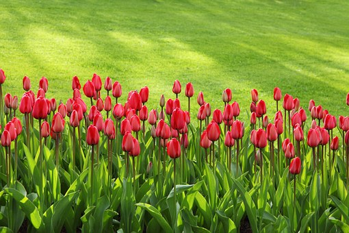 son jardin en mai