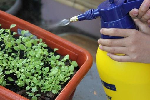 Nos astuces pour bien arroser ses plantes