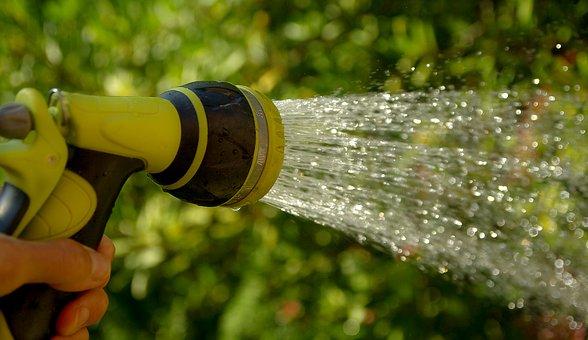 Nos conseils pour votre jardin en juin