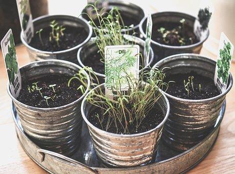Créer on propre jardin d'intérieur
