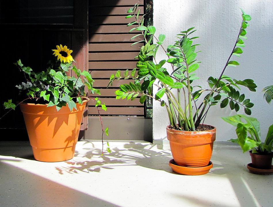 Les plante d'intérieur